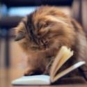Литературная викторина «Кот, который….»