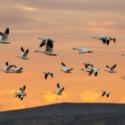 Виртуальный блиц-опрос «У каждой пташки свои замашки»