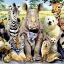 Виртуальный турнир юных зоологов «Мы с тобой одной крови»